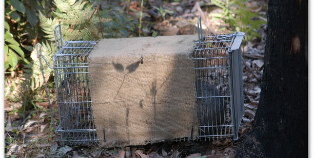 Animal Trapping